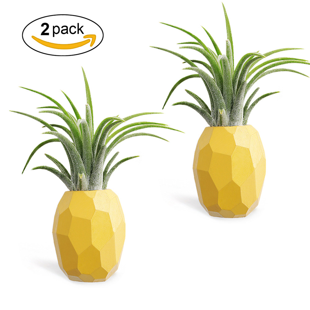 Air Plant Wall Holder Air Plant Holder Hanging Air Plant Holders 2 Pack Pineapple