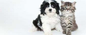 Should You Include Pets In Your Will?