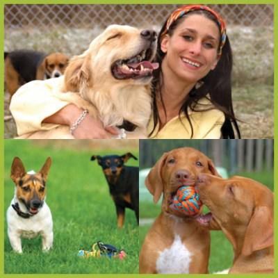 Dog Daycare Business