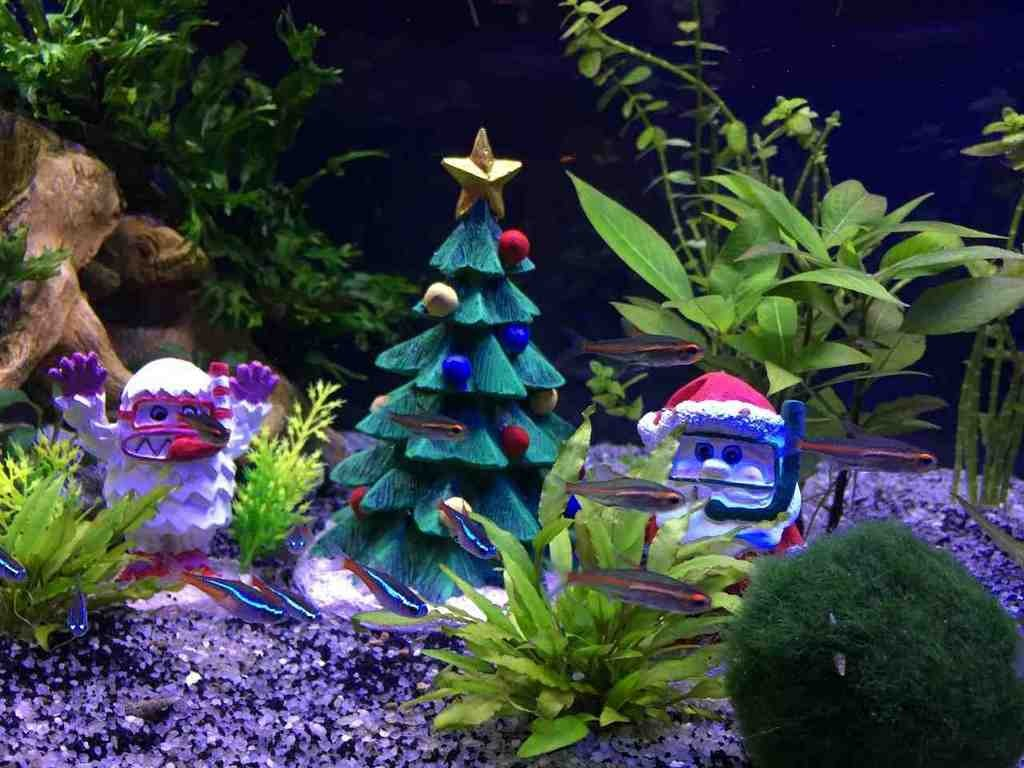 Decoration Interieur Aquarium Aquarium Christmas Decorations Decor Ideasdecor Ideas