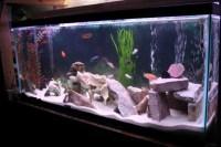 Cichlid Aquarium Decorations - Decor IdeasDecor Ideas