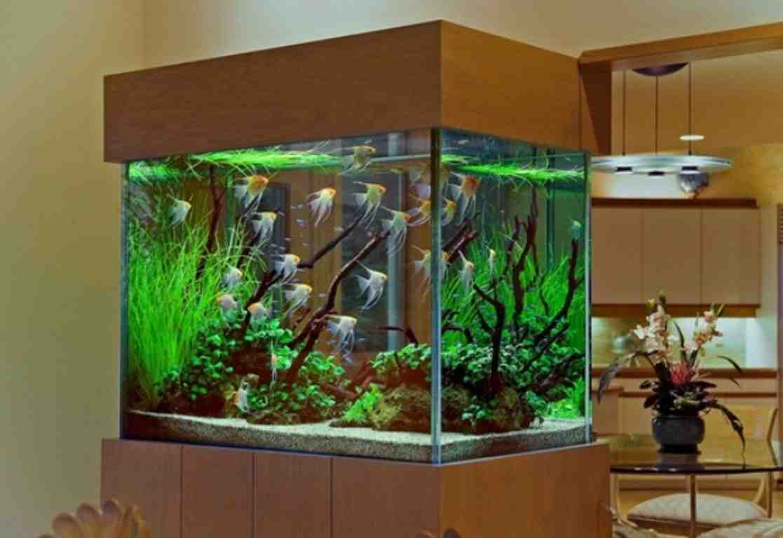 Deko Discount 24 Discount Aquarium Decorations Decor Ideasdecor Ideas