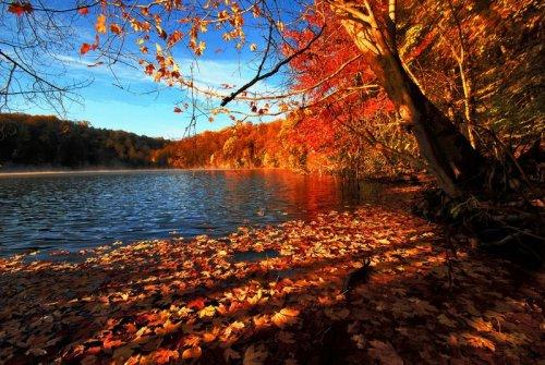 Full Screen Desktop Fall Leaves Wallpaper S 252 Per Manzara Fotoğrafları