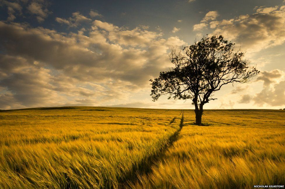 Fall In Love Mobile Wallpaper In Pictures Ordnance Survey Photo Competition Bbc News