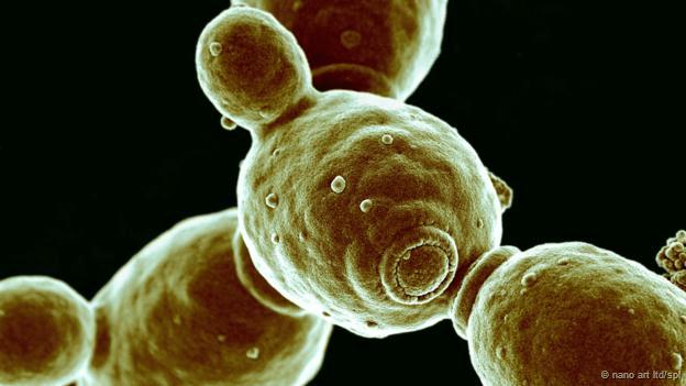 El virus de la Cándida