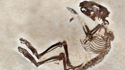 Fossils reveal 'missing links' in Earth's evolution after dinosaurs - BBC News