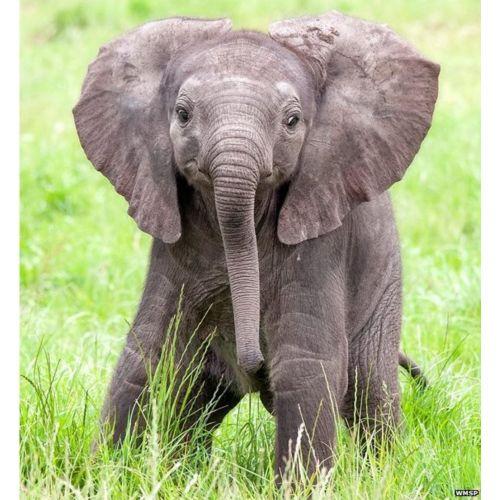 Medium Crop Of Do Elephants Think Humans Are Cute