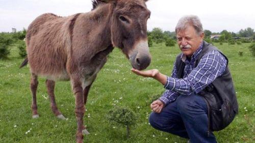 Vukadinović eşeklerden birini besliyor