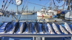 Pescados en un mercado, frente al mar