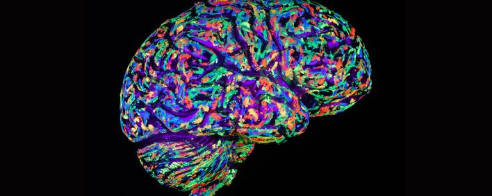 Brain's Miracle Superpowers