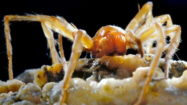 BBC - Earth - The bizarre beasts living in Romania\u0027s poison cave