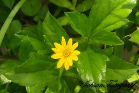 Bunga Warna Kuning