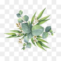Black And Orange Wallpaper Eucalyptus Png Amp Eucalyptus Transparent Clipart Free