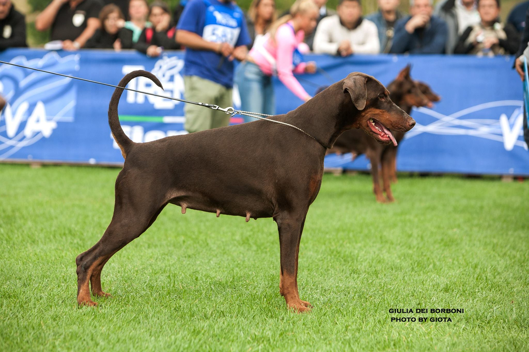 Arte Romano En Navarra Welcome To The International Dobermann Club