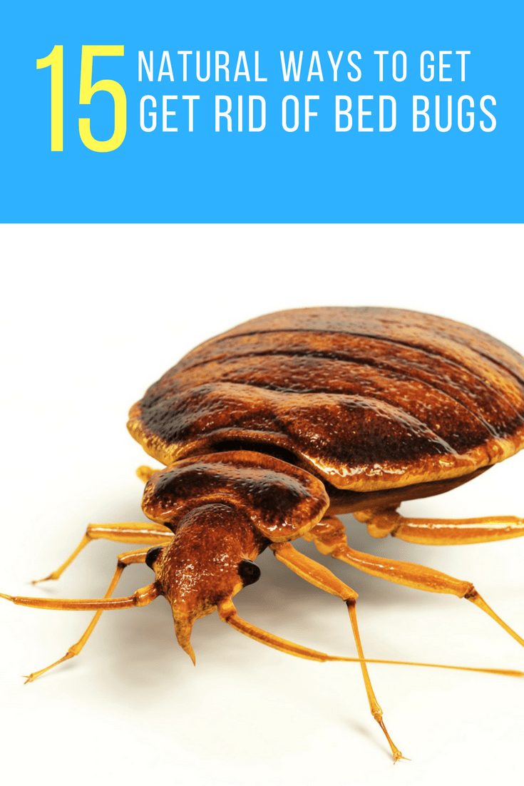 Spray To Kill Bed Bugs How To Get Rid Of Bed Bugs Forever 15 Natural Ways
