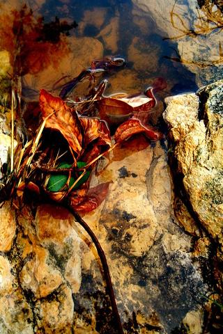 Fall Leaf Iphone Wallpaper Nature Iphone Wallpaper Idesign Iphone