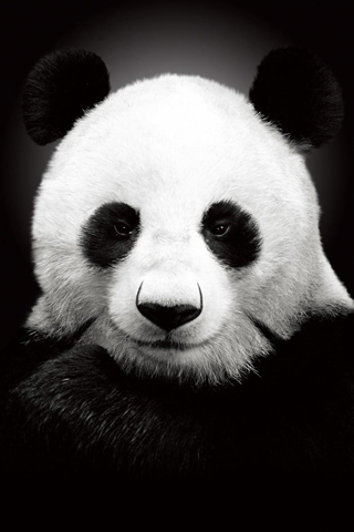 3d All Animal Wallpaper Panda Iphone Wallpaper Idesign Iphone