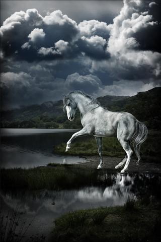 Beautiful Horse iPhone Wallpaper