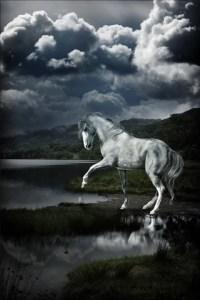 Beautiful Horse iPhone Wallpaper | iDesign iPhone