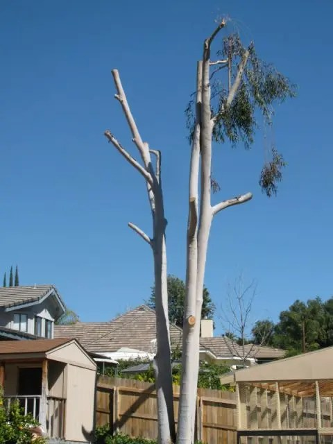 Tree Pruning Resist Topping Trees If Nature Could Talk