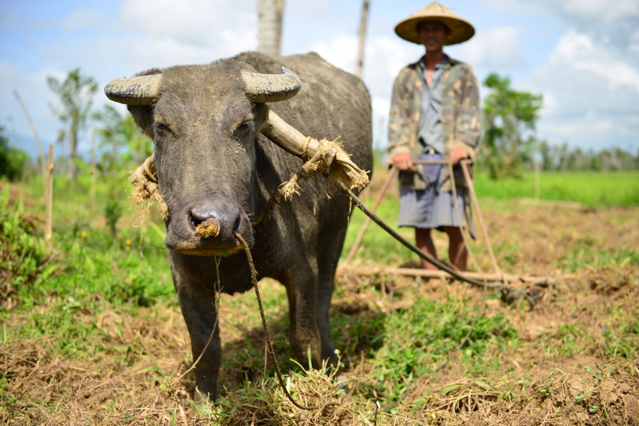 recovery_carabao_generic