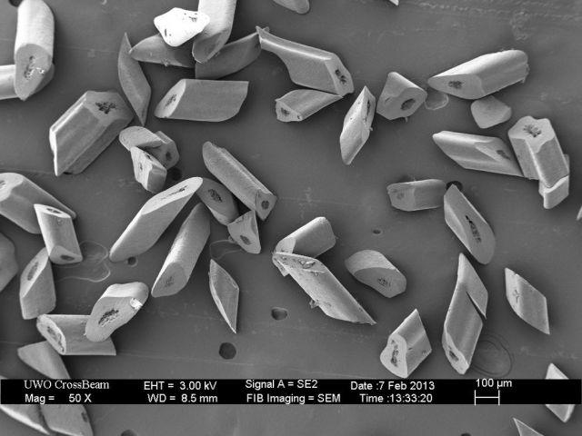 microscopio_imagens_16