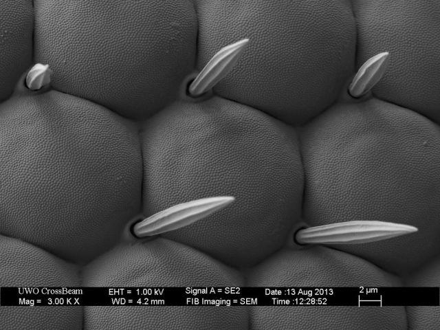 microscopio_imagens_18