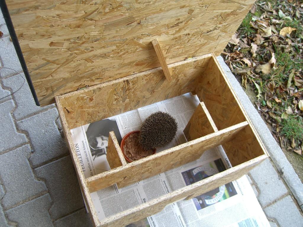 bauanleitung igelhaus bauen | natürliche unterschlüpfe im garten