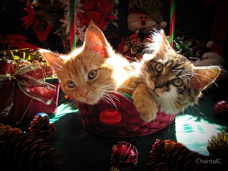 Cute Sleeping Babies Wallpapers Quot Christmas Basket Of Two Kittens In Love Portraits Of