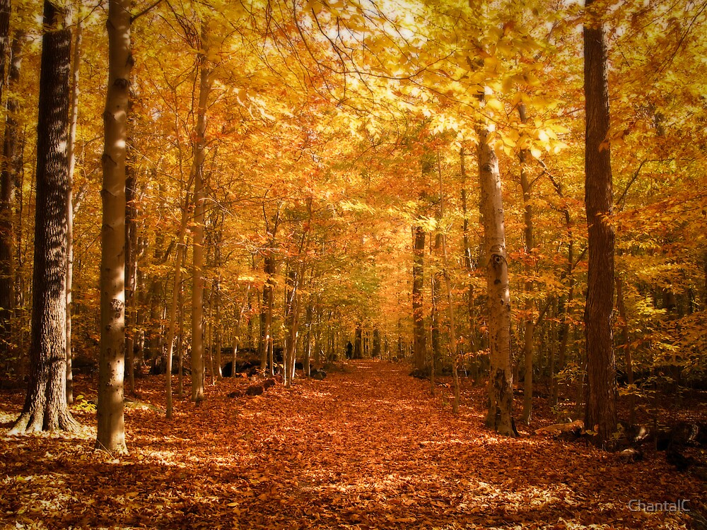 Fall Leaves Pathway Computer Wallpaper Quot Scenic Leaf Covered Path In A Yellow Mystical Fall Forest