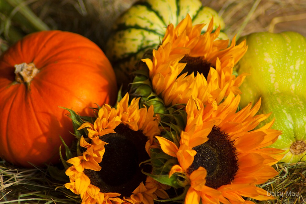 Fall Wallpaper Pintrest Quot Sunflowers N Pumpkins Still Life Quot By Daisy May Redbubble
