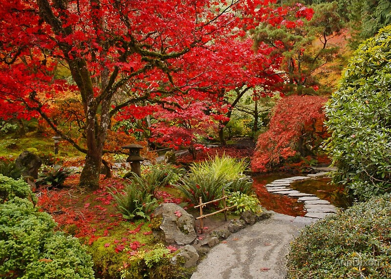 Fall Leaves Ipad Wallpaper Quot Japanese Garden In Butchart Gardens Bc Canada Quot By