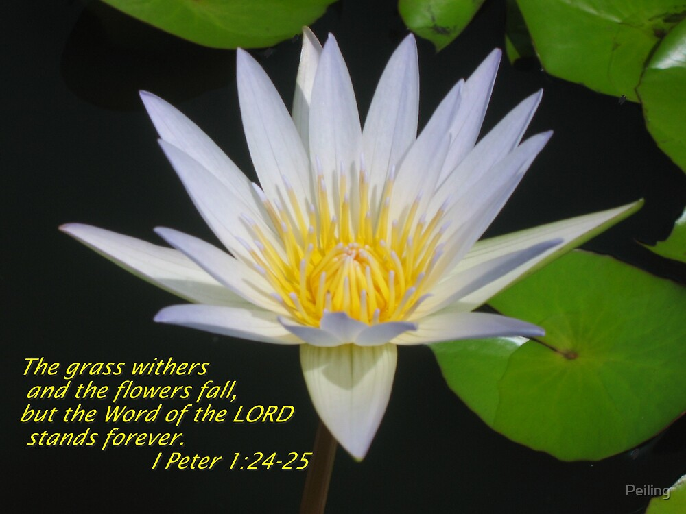 Christian Fall Iphone Wallpaper Quot Christian Art Lotus Flower With Scriptures Quot By Peiling