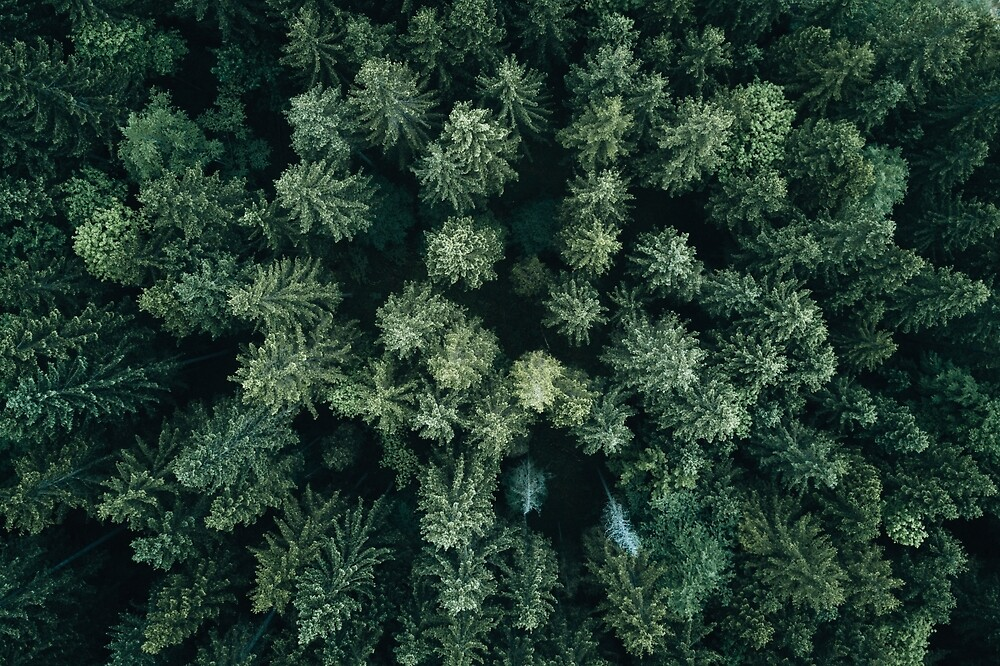 Airplane Wallpaper Iphone X Quot Forest Drone Landscape Photography Quot By Michael Schauer