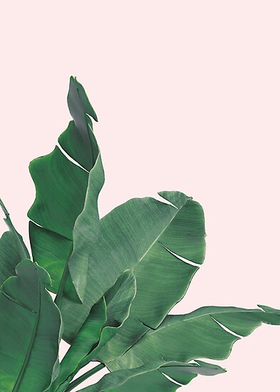 Palm Tree Iphone Wallpaper Quot Banana Leaves Tropical Leaf Quot Photographic Print By Nth4ka