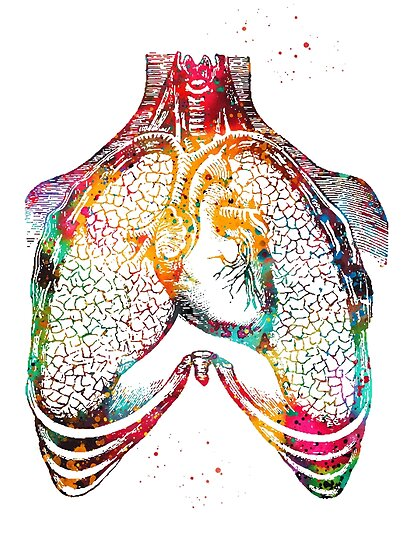 Human heart and lungs Posters by erzebetth Redbubble