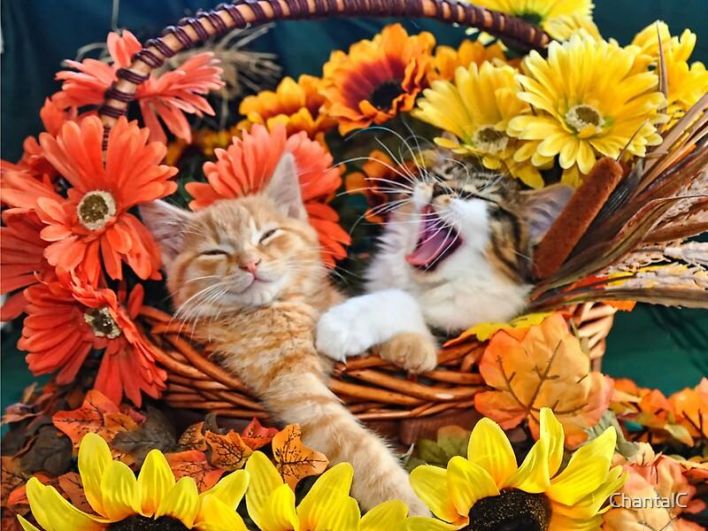 Fall Leaves Live Wallpaper Iphone Quot Venus Amp Di Milo Cute Kitty Cat Kittens In Fall Colors