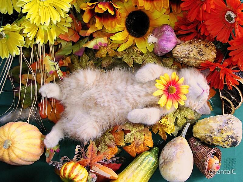 Fall Kittens Wallpaper Quot Di Milo Fall Harvest Cute Kitty Cat Kitten In Fall
