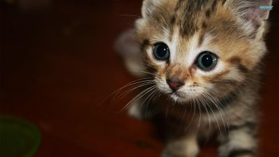 Happy Kittens HD Wallpapers | I Have A PC