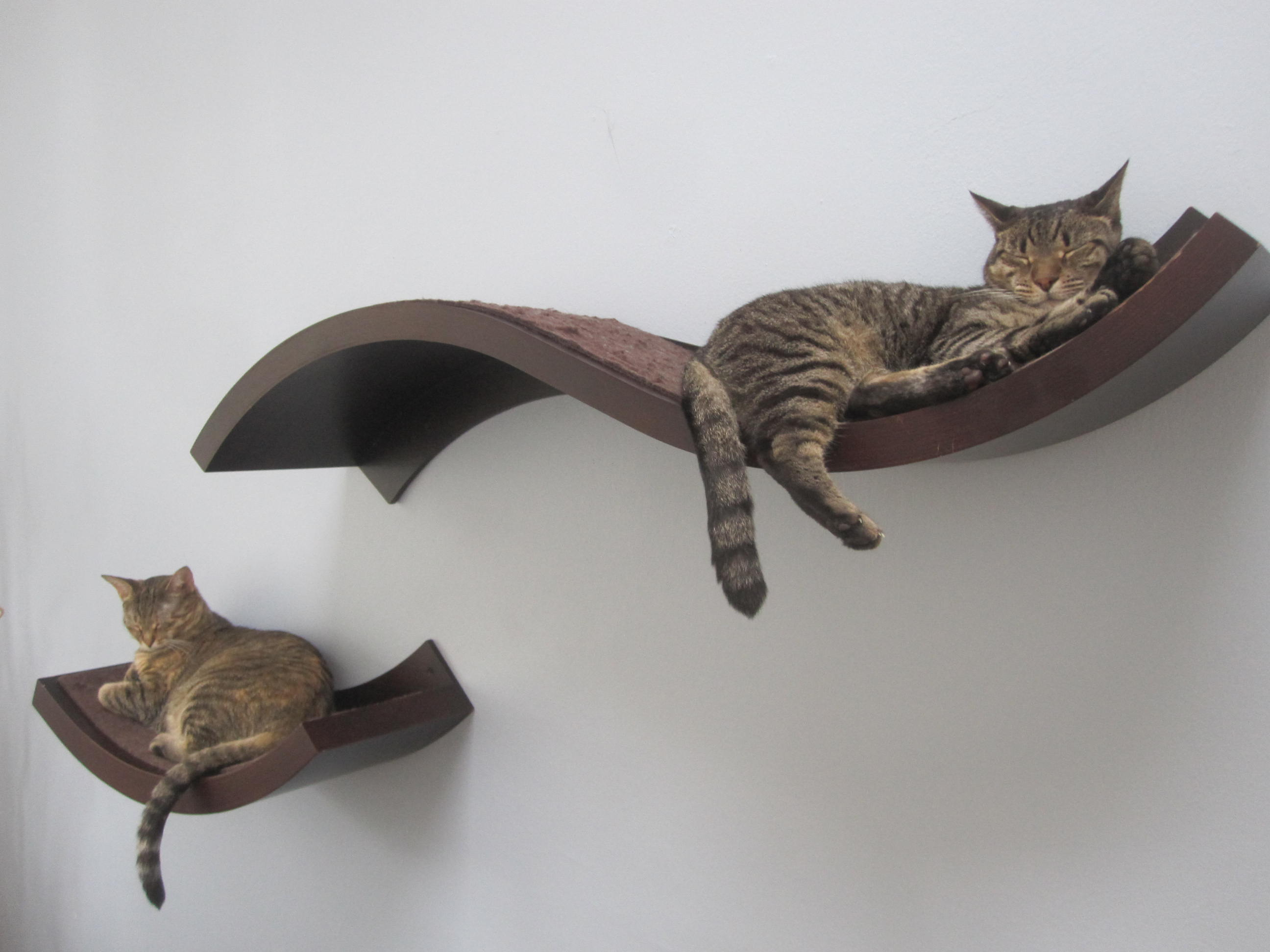 Modern Cat Shelves 11 Tips For A Safe And Stylish Kitty Home I Have Cat