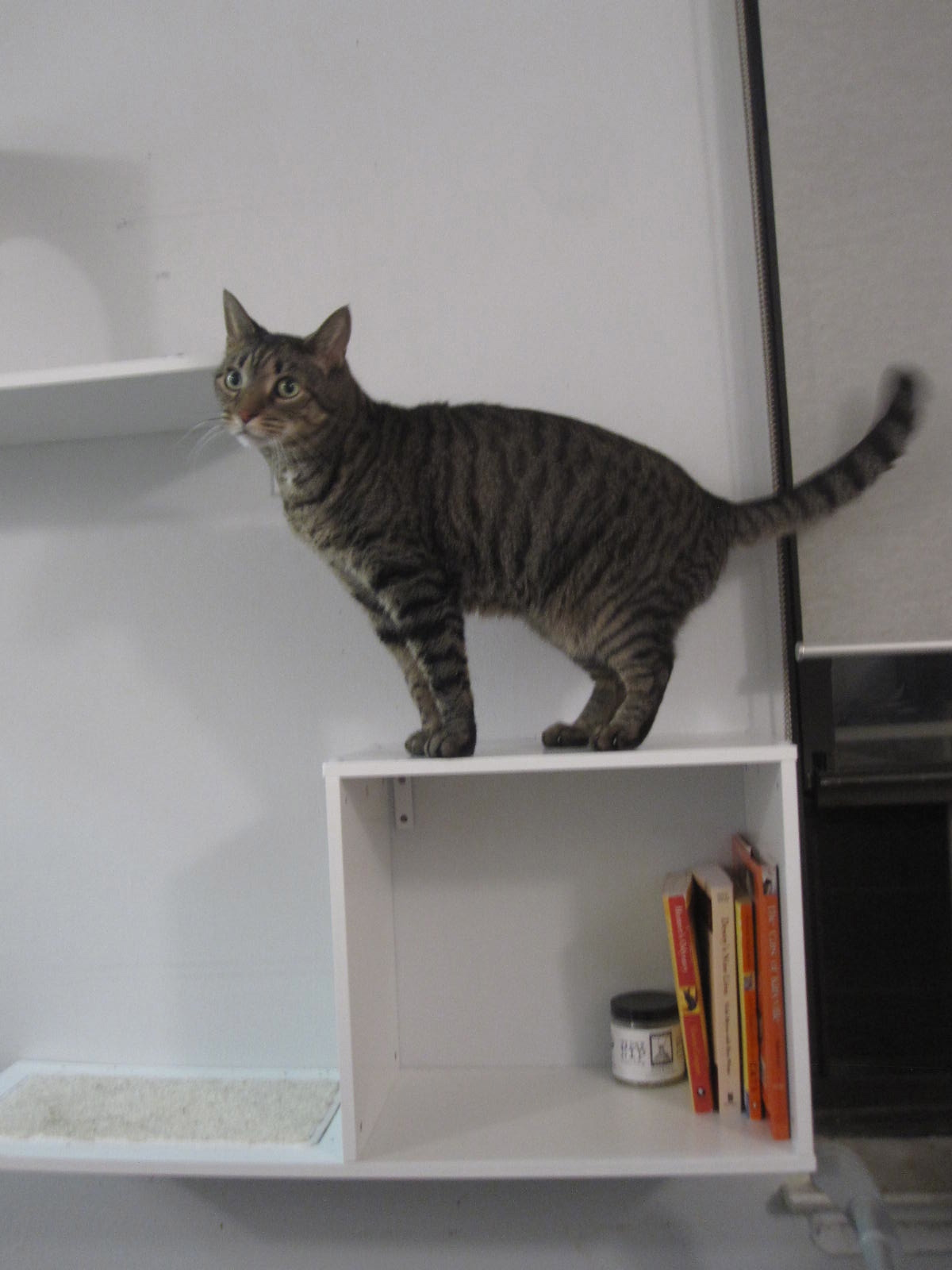 Cool Cat Supplies Cool Cat Shelves From Designer Pet Products I Have Cat