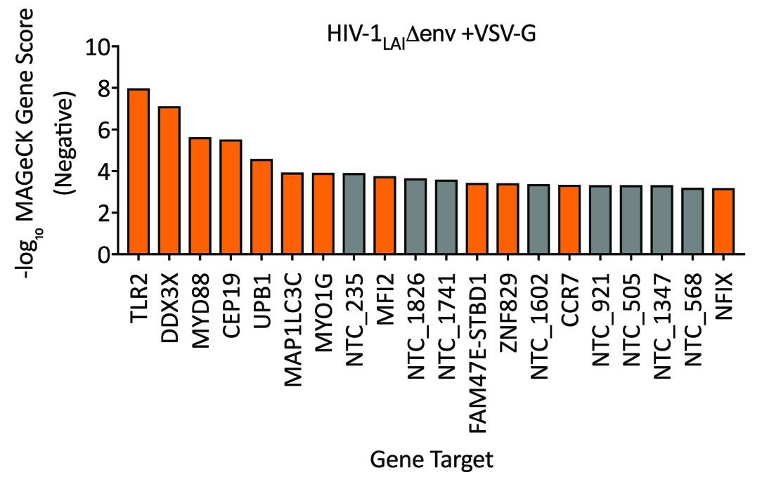 A virus-packageable CRISPR screen identifies host factors mediating