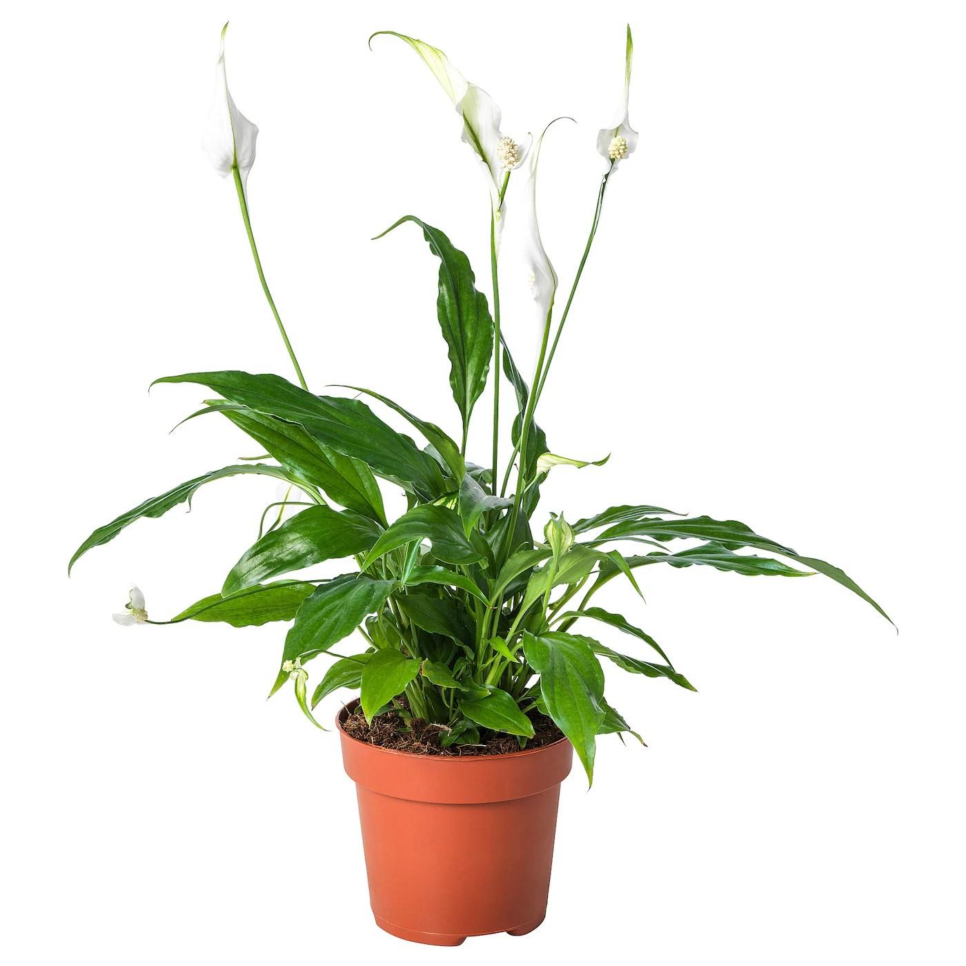ikea suspension plante plante a suspendre sur chambre ikea beau meuble plante luxe. Black Bedroom Furniture Sets. Home Design Ideas