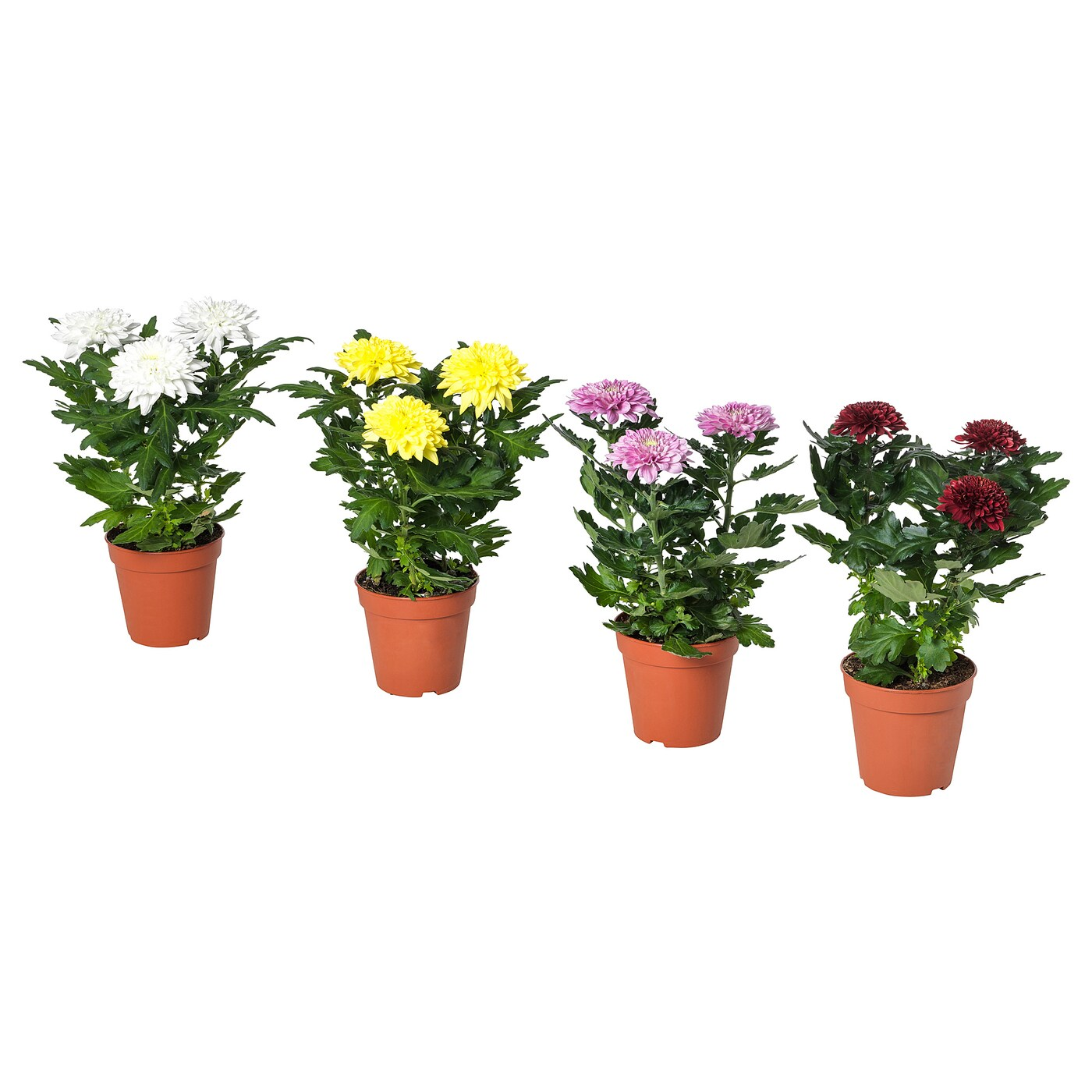 Small House Plants With Flowers House Plants Cactus Outdoor And Indoor Plants Ikea