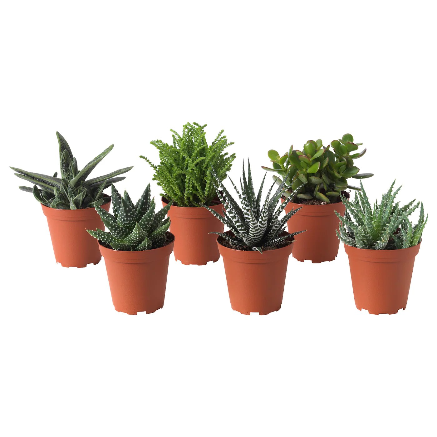 Mini Plant Pots Bulk Succulent Potted Plant Assorted 9 Cm Ikea