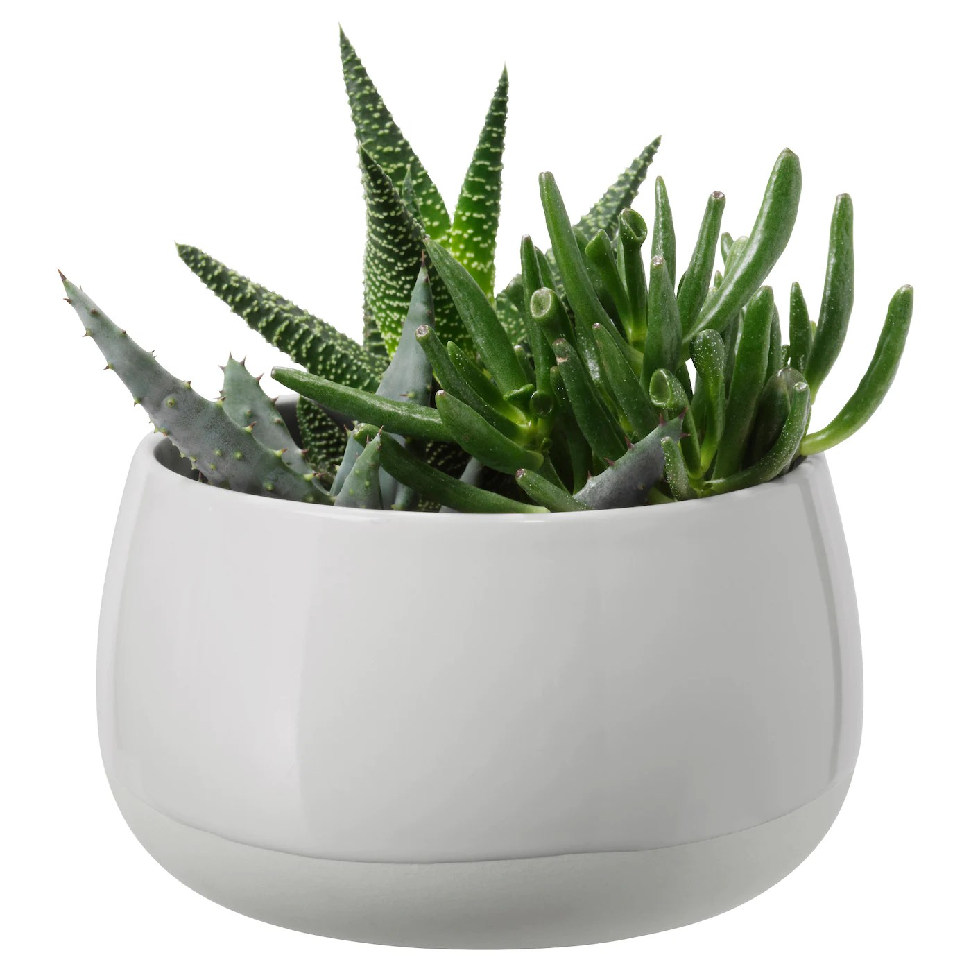 Cactus Planting Pots Succulent Potted Plant With Pot Grey 12 Cm Ikea