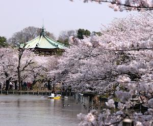 春 東京 おすすめ デート スポット ランキング 5