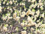 「春のない年」を花で補う