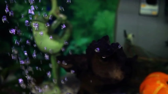 Close Up Shot Of A Fish Tank Stock Footage Video 3829991
