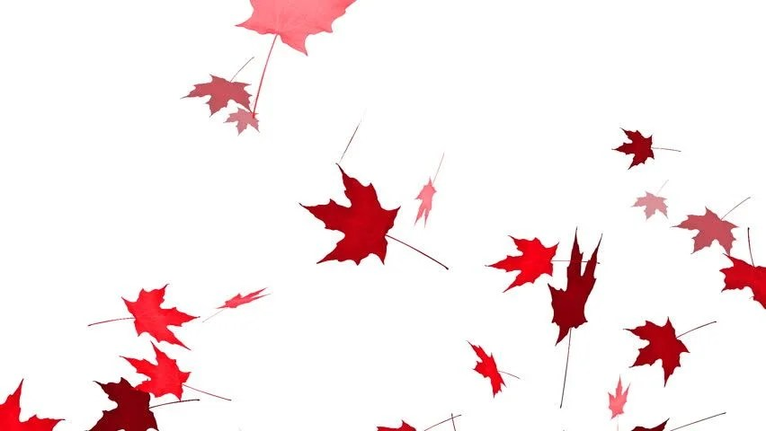 Autumn Tree Leaf Fall Animated Wallpaper Falling Maple Leaves Animation With Alpha Channel Stock